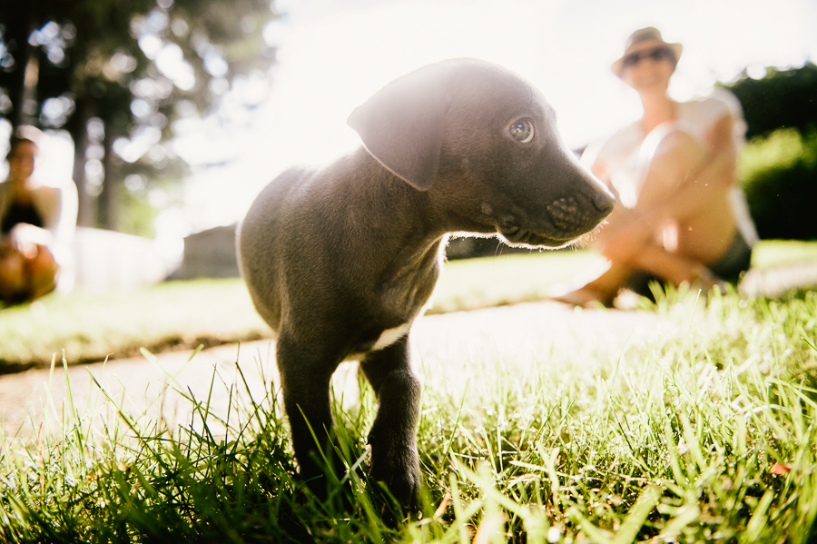 blue-lacy-puppy-first-day-with-owners-87