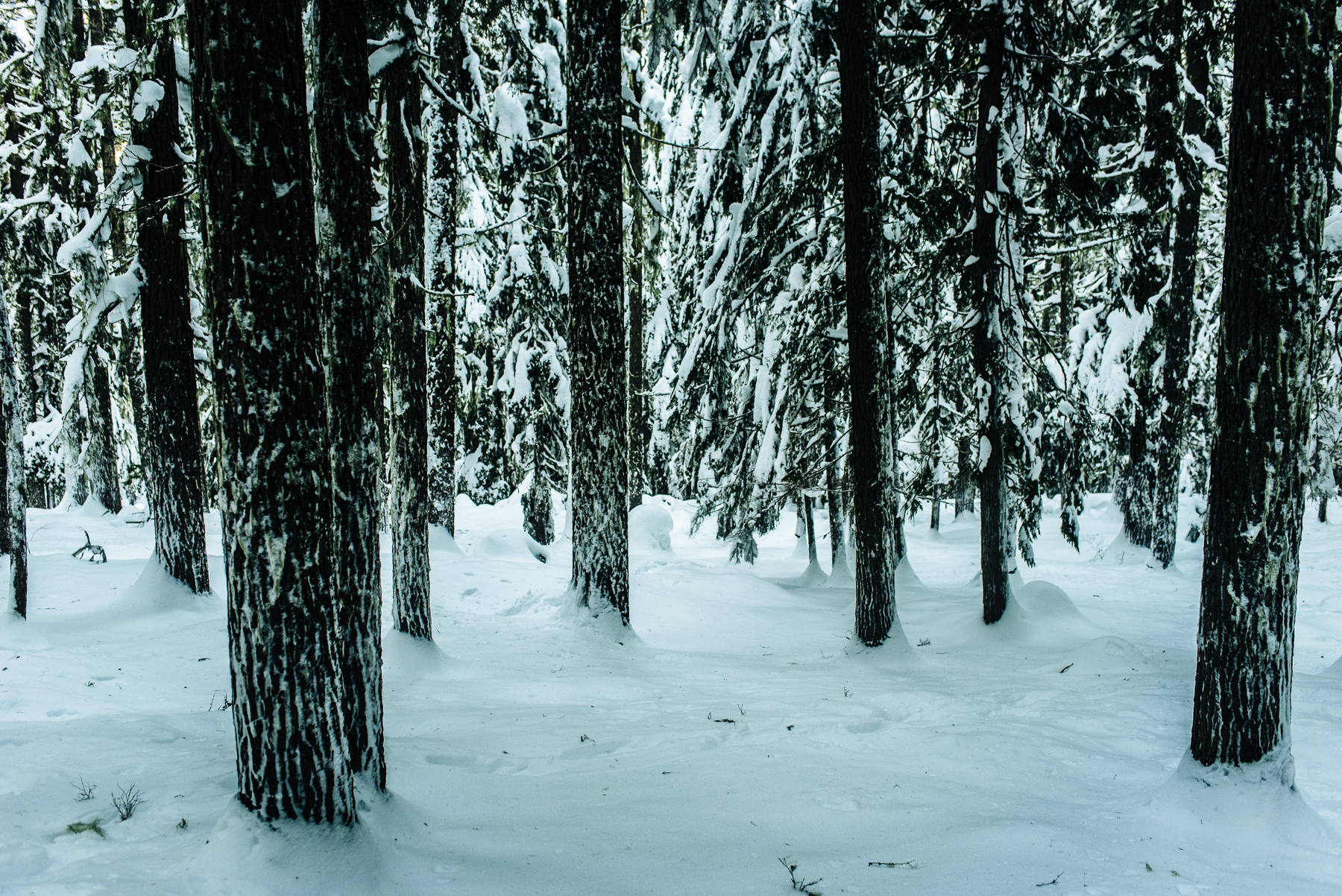 stevens-pass-nordic-center-snowy-engagement-session-3