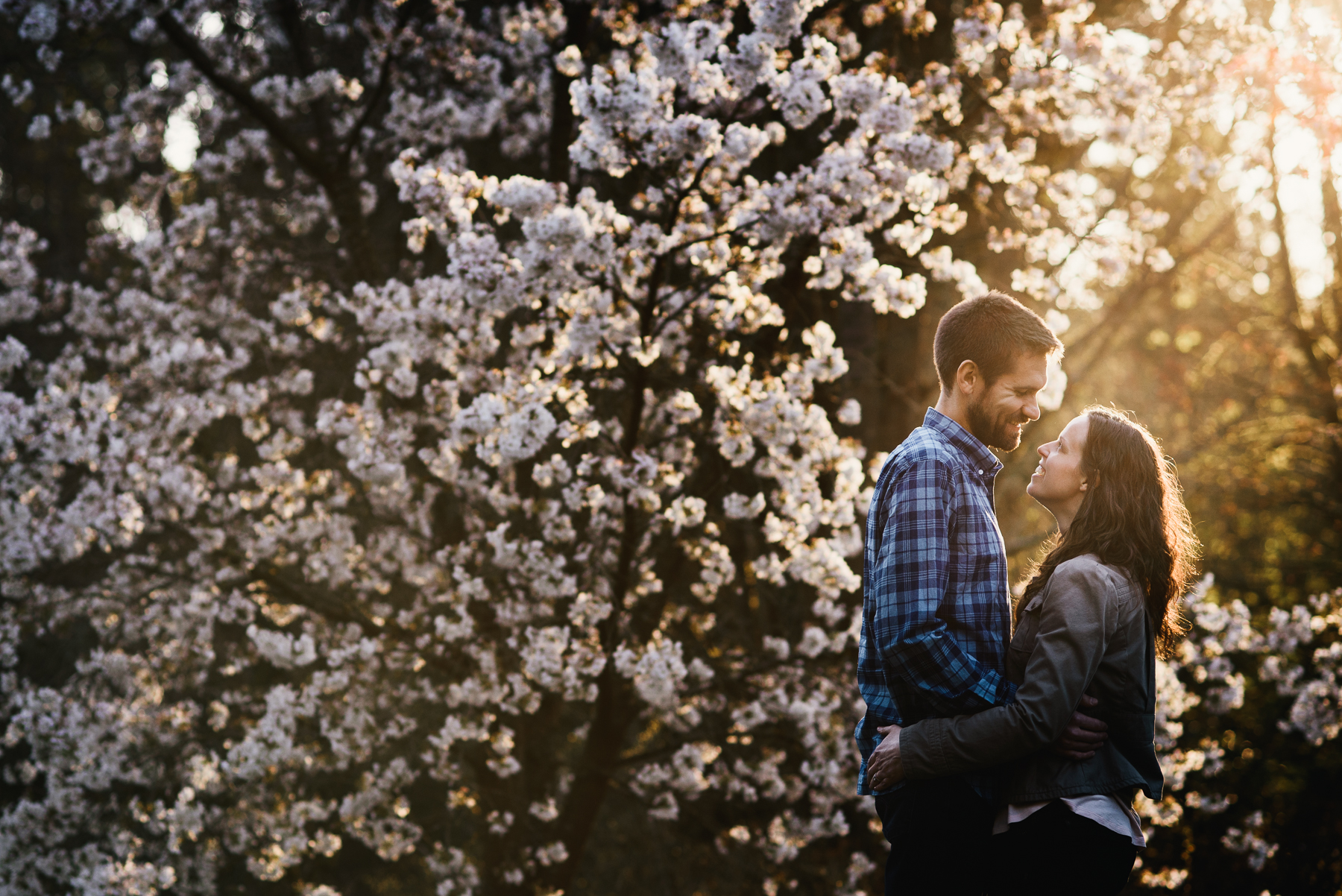 washington arboretum cherry blossom engagement
