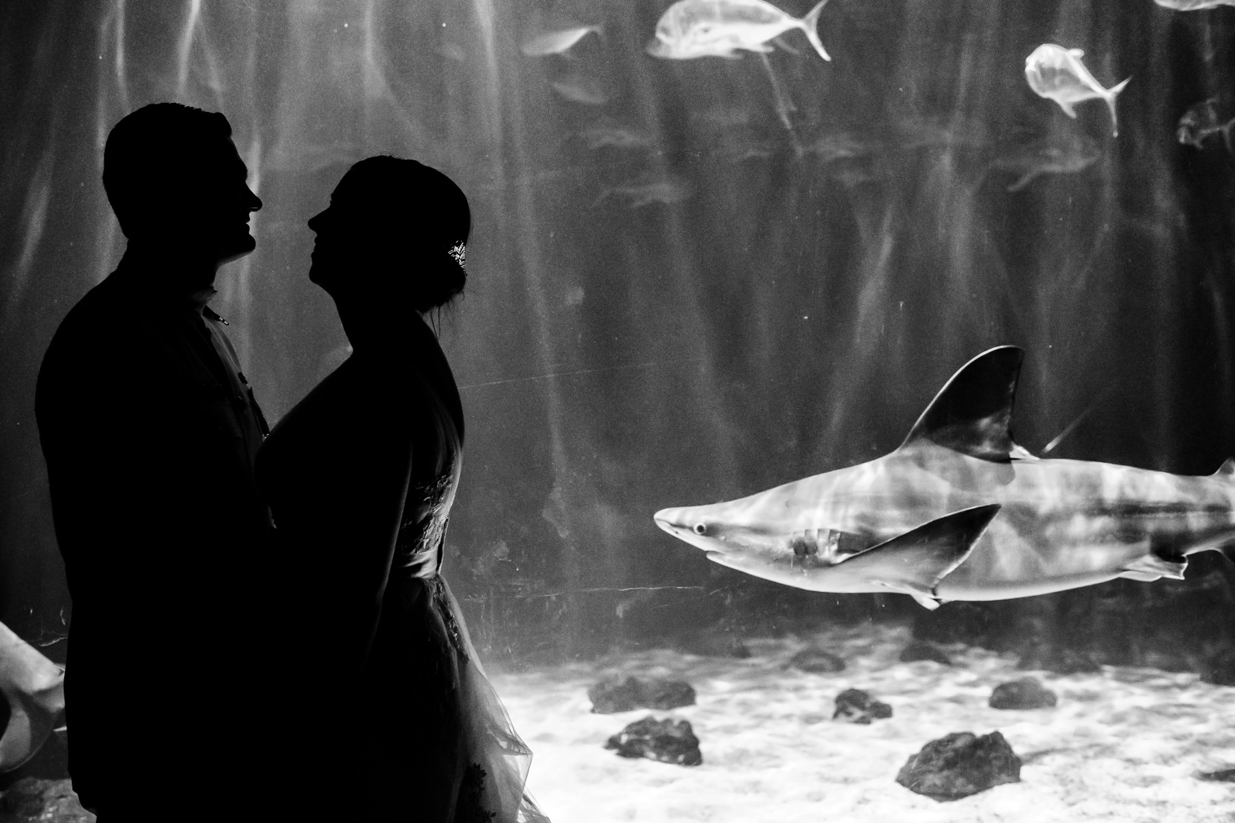 tacoma point defiance zoo and aquarium wedding