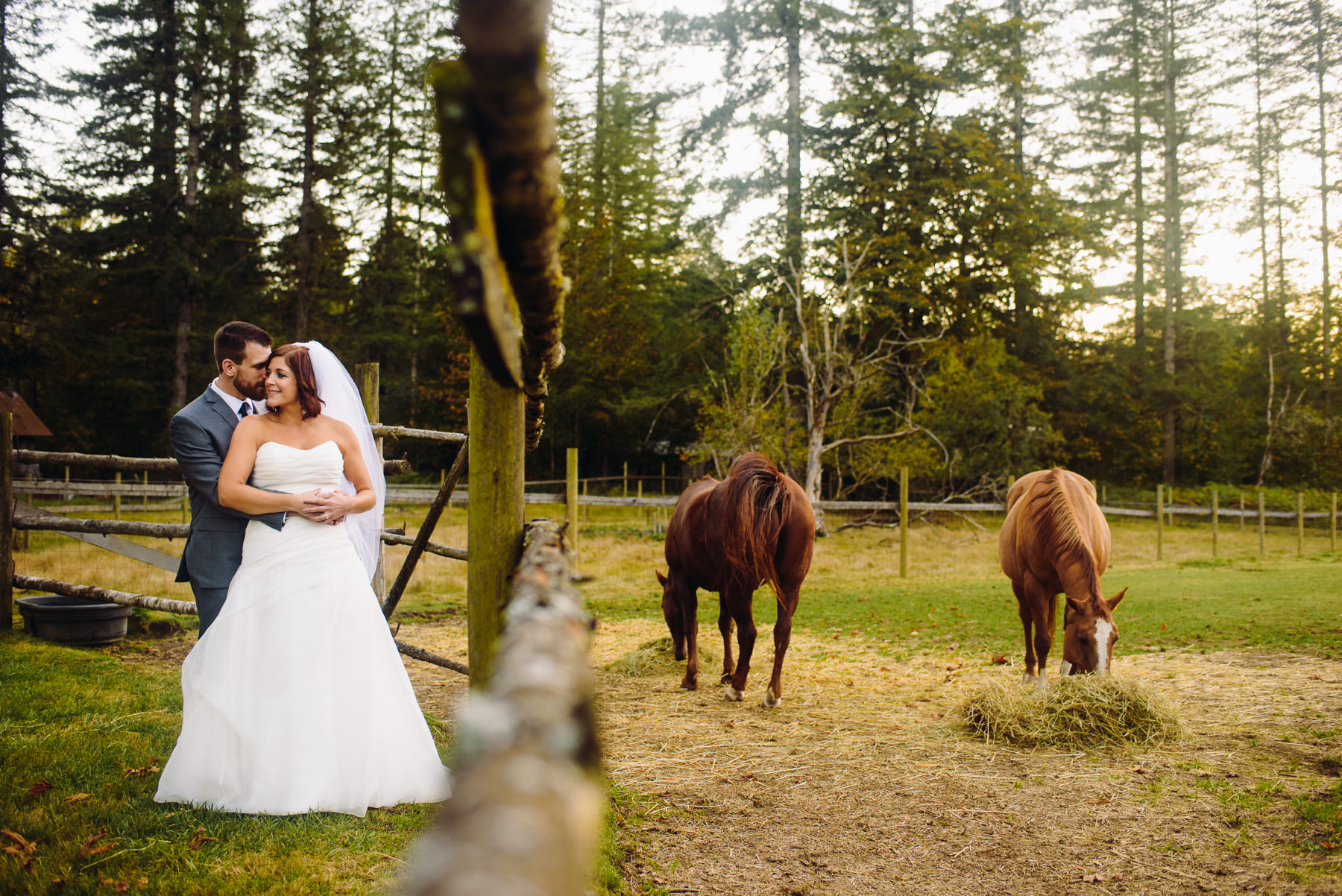 Pomeroy Farms horses wedding portraits